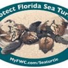 Sea Turtle | FWC Decal | Sea Turtle Decal