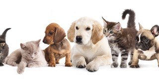 Animals   Pets   Dogs and Cats