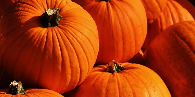 Pumpkins | Autumn | Fall