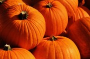 It's Pumpkin Palooza Time in St. Pete