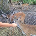Deer Killed | Nature's Classroom | Animal Cruelty