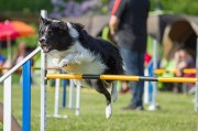 Have Fun with Dogs in Brooksville