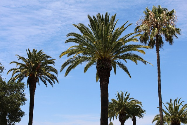 Palms | Trees | Beautification