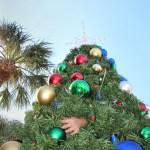 Gulfport   Holiday Tree   Events