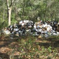 Broadway Dumpsite | Hillsborough Sheriff | Arrests