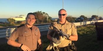 Pellican | Florida Highway Patrol | Sunshine Skyway
