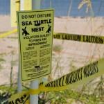 Sea Turtle | FWC | Sea Turtle Nesting