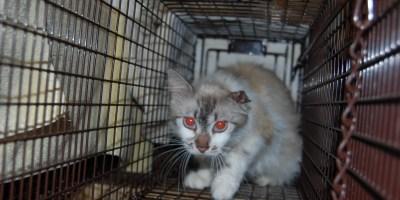 Meow Now | Feral Cats | TNVR