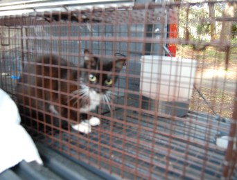 Meow Now | Feral Cats | TB Reporter