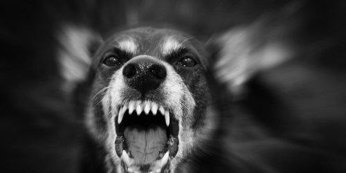 Dangerous Dog | Dog Attack | Dog Bite