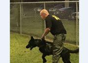 FDLE Certifies Sheriff's K-9 Teams in Hernando