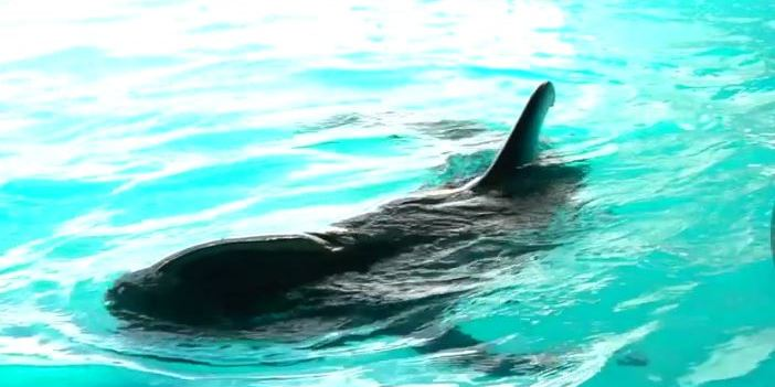 Pilot Whale Rescue | Animals | Environment