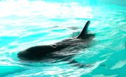 Pilot Whale Returns to Sea