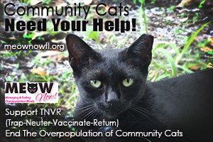 Meow Now TNVR Cat Rescue Pinellas