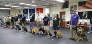 Pasco Animal Services Helps Vets Find Service Dogs