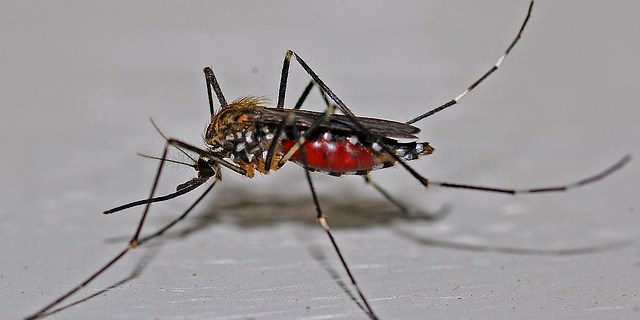 Mosquito | West Nile | Sentinel Chicken