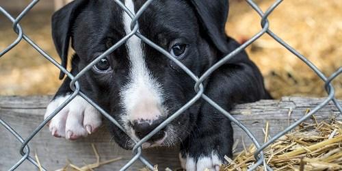 Puppy | Dog | Puppy Mill