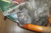The Sassy Sandpiper: Deliberately a Crazier Cat Lady