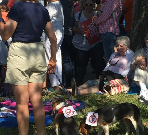 March For Our Lives Pinellas Photos 12 – Gun Control Dogs