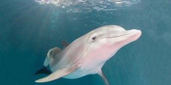 Winter the Dolphin | Clearwater Marine Aquarium | Clearwater Beach