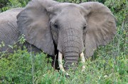 FWC to Consider Rules for Elephant Rides