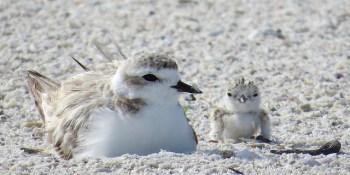Seabirds   Wildlife   Birds
