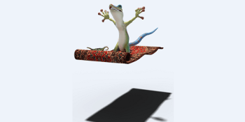 Gecko   Animal   Wildlife
