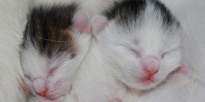 Kittens | Pets | Animals