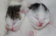Pinellas Seeks Foster Care for Kittens
