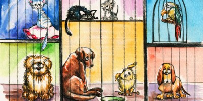 Pet Adoption | Cats and Dogs | Pets