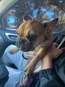 French Bulldog Puppy | Largo Police | Crime