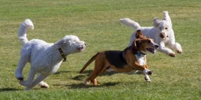 Pets | Dog Park | Paw Park
