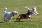 Construction Begins on Achieva Dog Park Expansion
