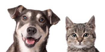 Pets | Animal | Dogs and Cats