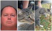 St. Pete Man Hit, Kicked Cat, Police Say