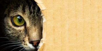 Cat | KItten | Pet Adoption