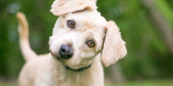 Pets   Dogs   Pet Adoption