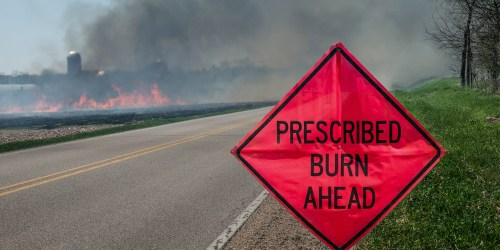 Prescribed Burn | Prescribed Fire | Forest