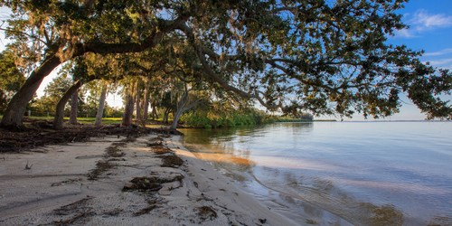 Mobbly Beach Park   Oldsmar   Places to Go