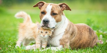 Pets | Animals | Puppies and Kittens