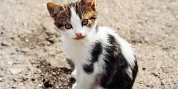 Feral Cats | Community Cats | Animals