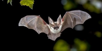 Bats | Wildlife | TB Reporter