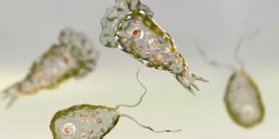 Brain Eating amoeba | Naegleria fowleri | Health