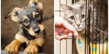 Pets | Pet Adoption | Homeless Animals