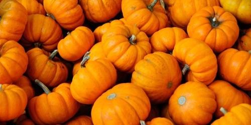 pumpkins | Halloween | Thanksgiving