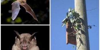 Bats | Breaking News | Local News