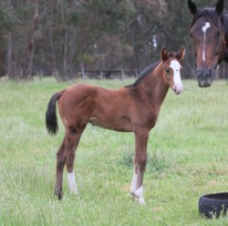Dick Turpin-Green Pulse colt