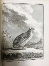 Aristotle asserts that Quails change their climate twice a year, like the ancient kings of Persia.