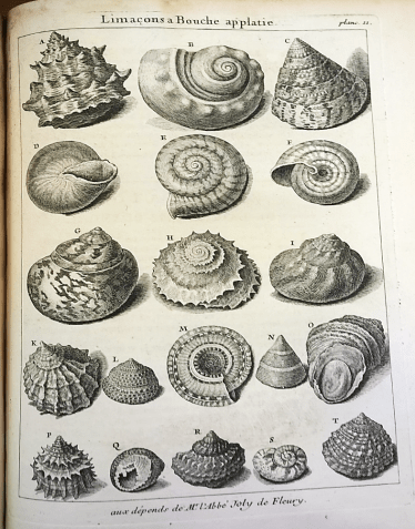 Limaçon shells which give their name to the Limaçon curve in mathematics