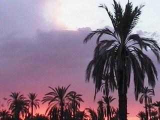 Tchad: un incendie ravage la palmeraie des quartiers périphériques à Faya-Largeau